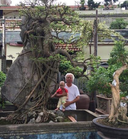 Ông Tình cho biết trong nhà hiện cócả trăm cây cảnh to, vài trăm cây nhỏ nhưng rất muốn mua thêm cây sanh này làm dày bộ sưu tập của mình. Ảnh: NVCC.
