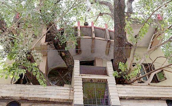 Thân cây đâm tua tủa ra các cửa sổ của ngôi nhà. Ảnh: AFP.