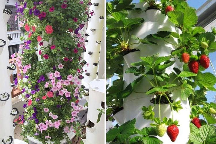 Không chỉ trồng rau, mô hình khí canh còn phù hợp để trồng nhiều loại cây cảnh, cây ăn quả. Ảnh: Thanh Hiếu.