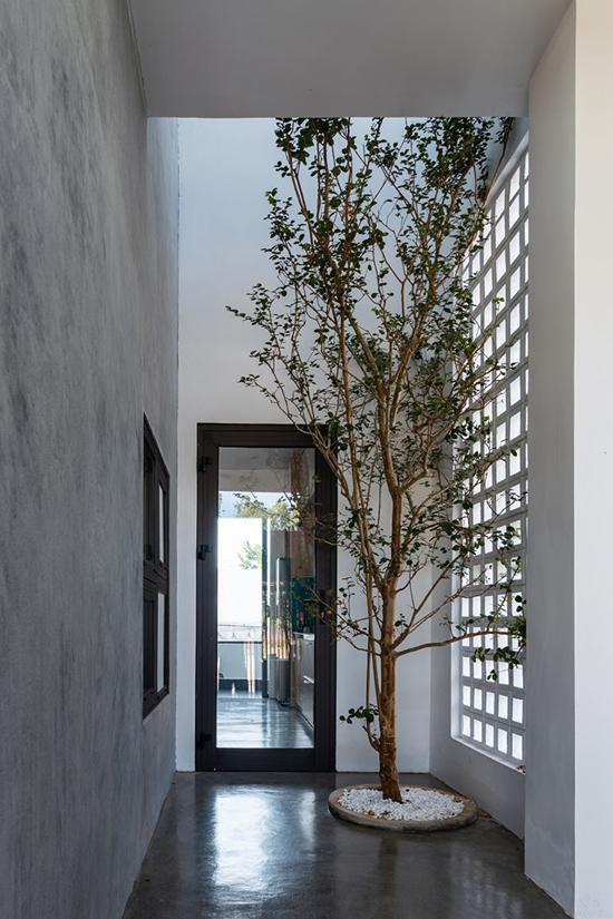 Lỗ gió, cây xanh mang tươi mát vào nhà Quảng Bình - ảnh 9