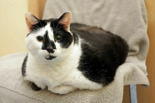Paisley không thể tự vệ sinh vì quá béo. Ảnh: Caters.