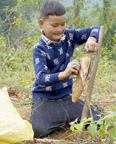 Niềm vui của Khuyên là đi đào sắn, mỗi kg cậubánđược một nghìn đồng. Ảnh: Trọng Nghĩa.