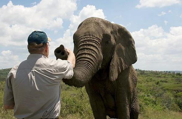 Lawrence chạm vào Nana, con voi đầu đàn. Ảnh: Thulathula.