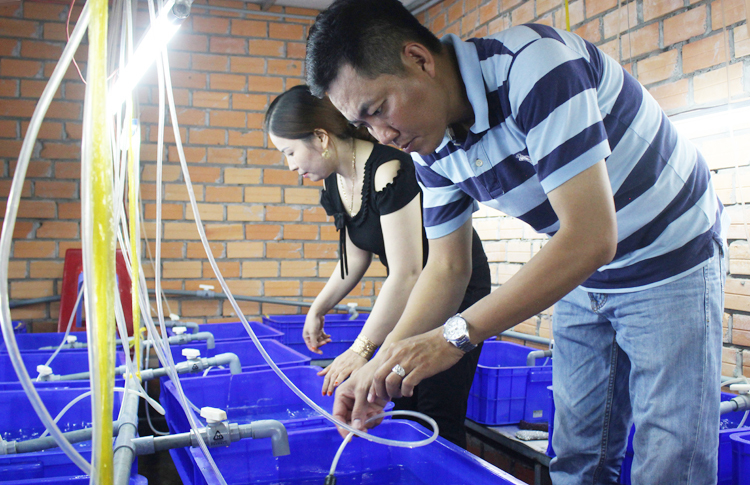 Anh Tân là người ấp trứng lươn nhân tạo nước sạch thành công nhất ở Vĩnh Long. Ảnh: Phan Diệp.
