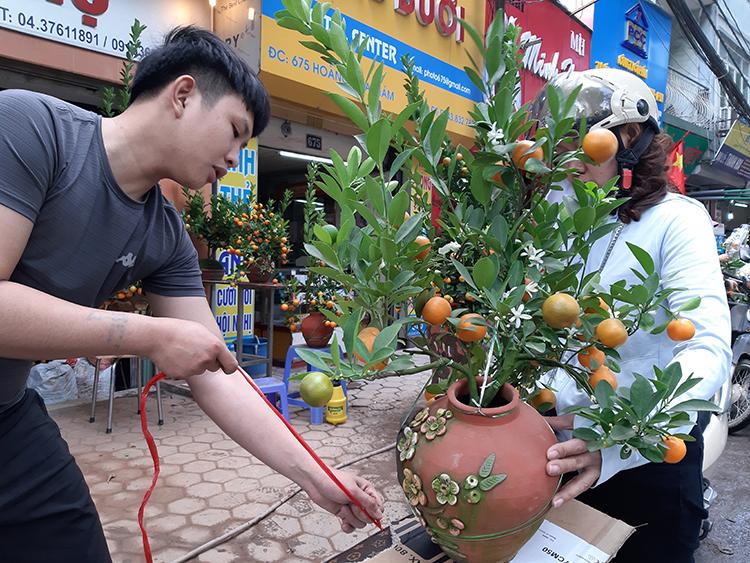 [Quất bonsai vài năm gần đây được nhiều người tìm mua bởi nhỏ gọn, hình dáng đẹp. Ảnh: Phạm Nga.