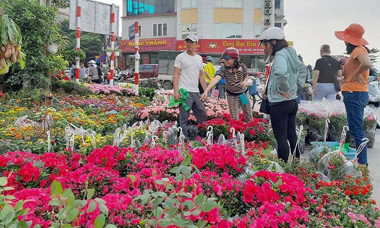 Người dân đi mua hoa sáng 11/1 tại chợ hoa Hoàng Hoa Thám, quận Tây Hồ, Hà Nội. Ảnh: Phạm Nga.