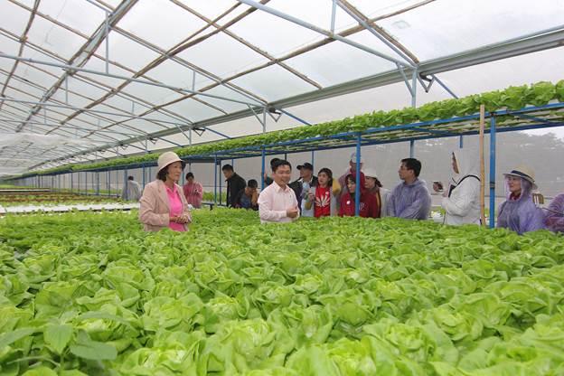 Trang trại rau sạch sản xuất theo tiêu chuẩn VietGAP của một trong những hộ nông dân hợp tác với MM Mega Market tại Lâm Đồng.