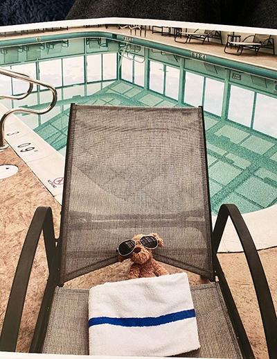 Chú chó nhồi bông Ruff Ruff đi chơi ở bể bơi của khách sạn. Ảnh:Jesse Aguila